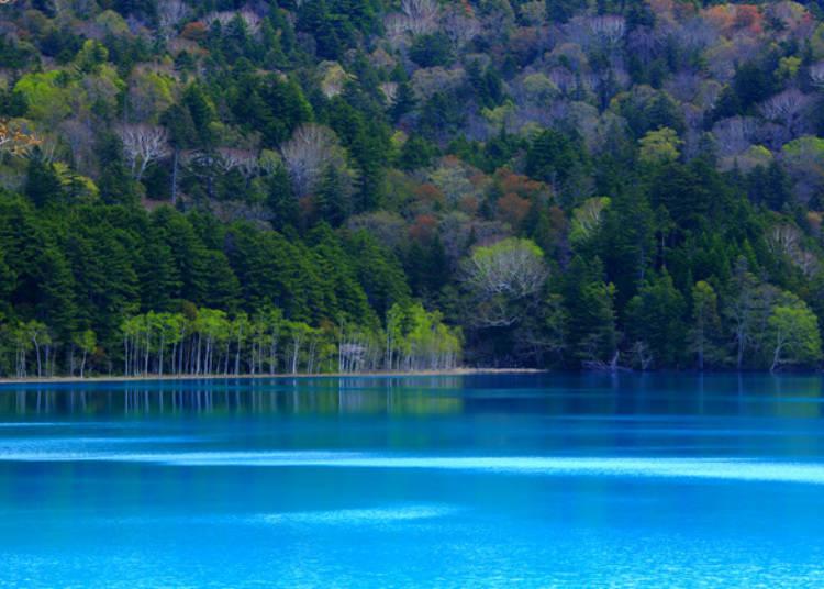 ▲與綠樹相互對比的青藍色湖面,「遠內多藍(オンネトーブルー)」便是指這鮮豔的藍色湖面/照片提供:Ashoro Tourism Association