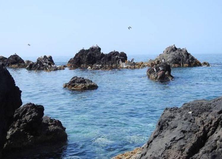 順時針繞行島內的話,從車窗左邊可以看到壯觀海景喔!