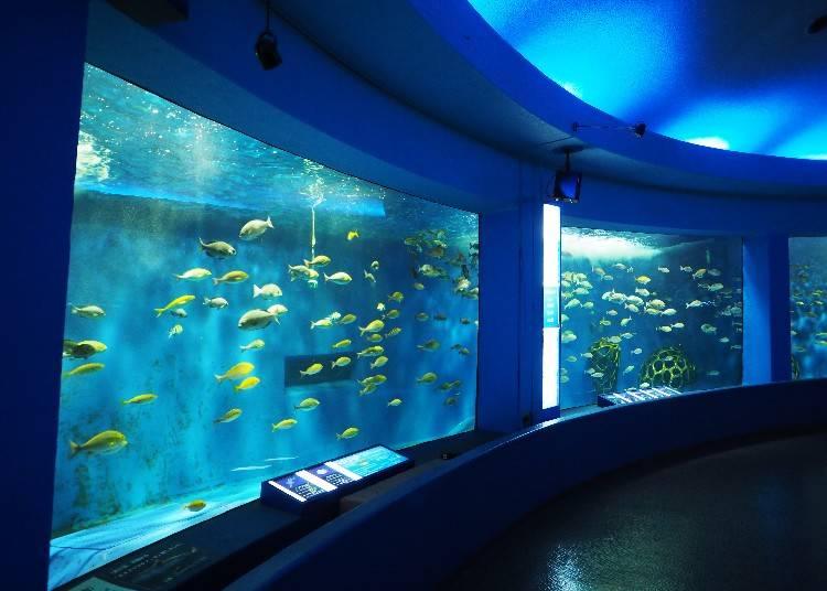 夢幻的360度水槽「回遊水槽」內有鯊魚、魟等魚類悠悠地游來游去。