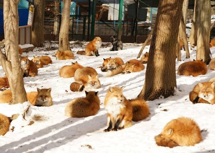 ※狐狸村的部落格