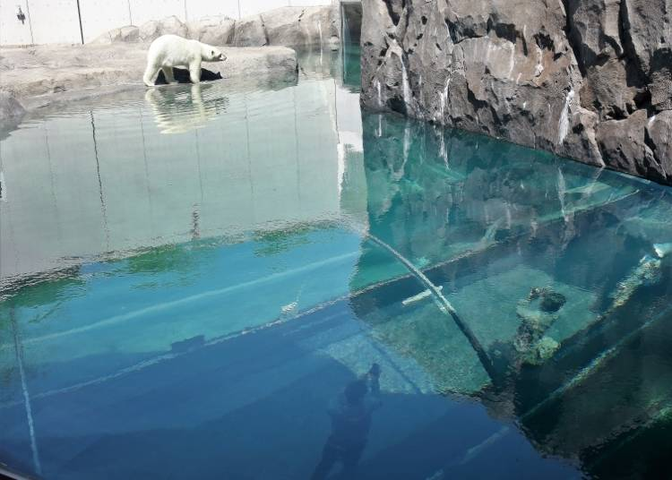 大大的水槽下方是玻璃的海底隧道