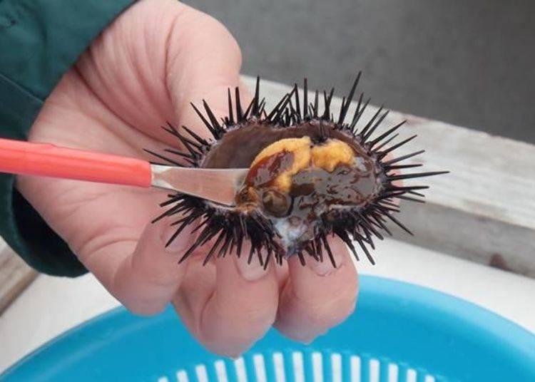 用刮棒小心翼翼地將海膽肉刮出來,要小心不要破壞到海膽肉喔!