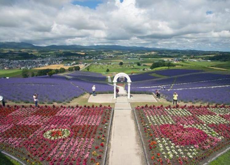 眺望台的周圍都是一片片寬闊的花田,夢幻的紫色薰衣草花田和遠方的富良野盆地在此一覽無遺。