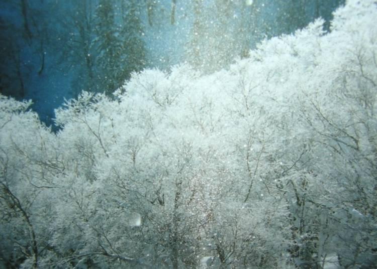 【冬】11~5月漫長的冬季,呈現夢幻的銀白世界