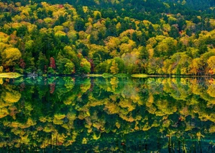 ▲特別推薦大家九月中到十月上旬的紅葉季節,由於日夜溫差大讓葉片的顏色更加飽合、鮮豔,非常美麗/照片提供:Ashoro Tourism Association