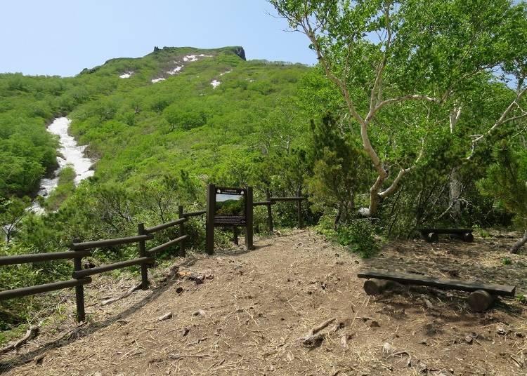 「黑岳神靈森林道路(岳カムイの森のみち)」的終點「雨龍瀑布展望台(あまりょうの滝展望台)」