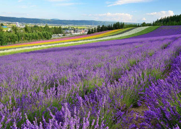 北海道知名景點「富良野‧美瑛」的觀光旅遊・美食・購物攻略指南!