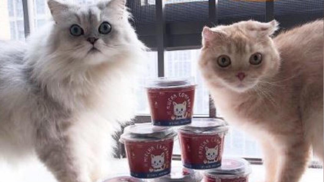 陸青年賣「寵物奶茶」 推北京烤鴨、鮭魚口味