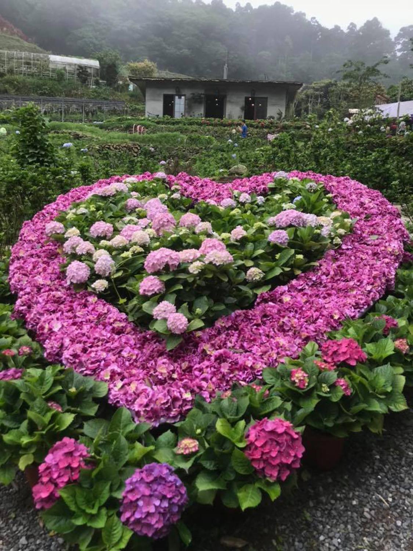 曹家花田今年新開幕,園區內花卉造景引人注目。 圖:取自曹家花田臉書