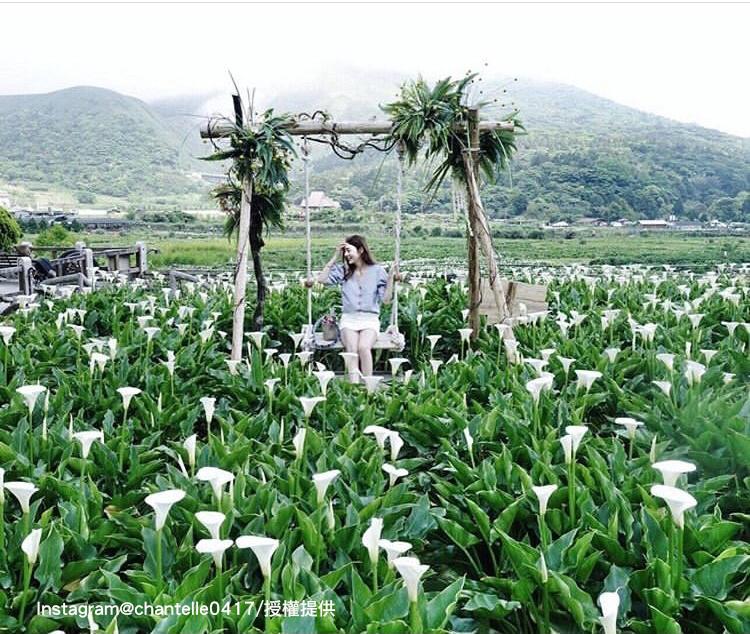 陽明山竹子湖為北部海芋的盛產地。圖:翻攝自instagram chantelle0417 /開放權限