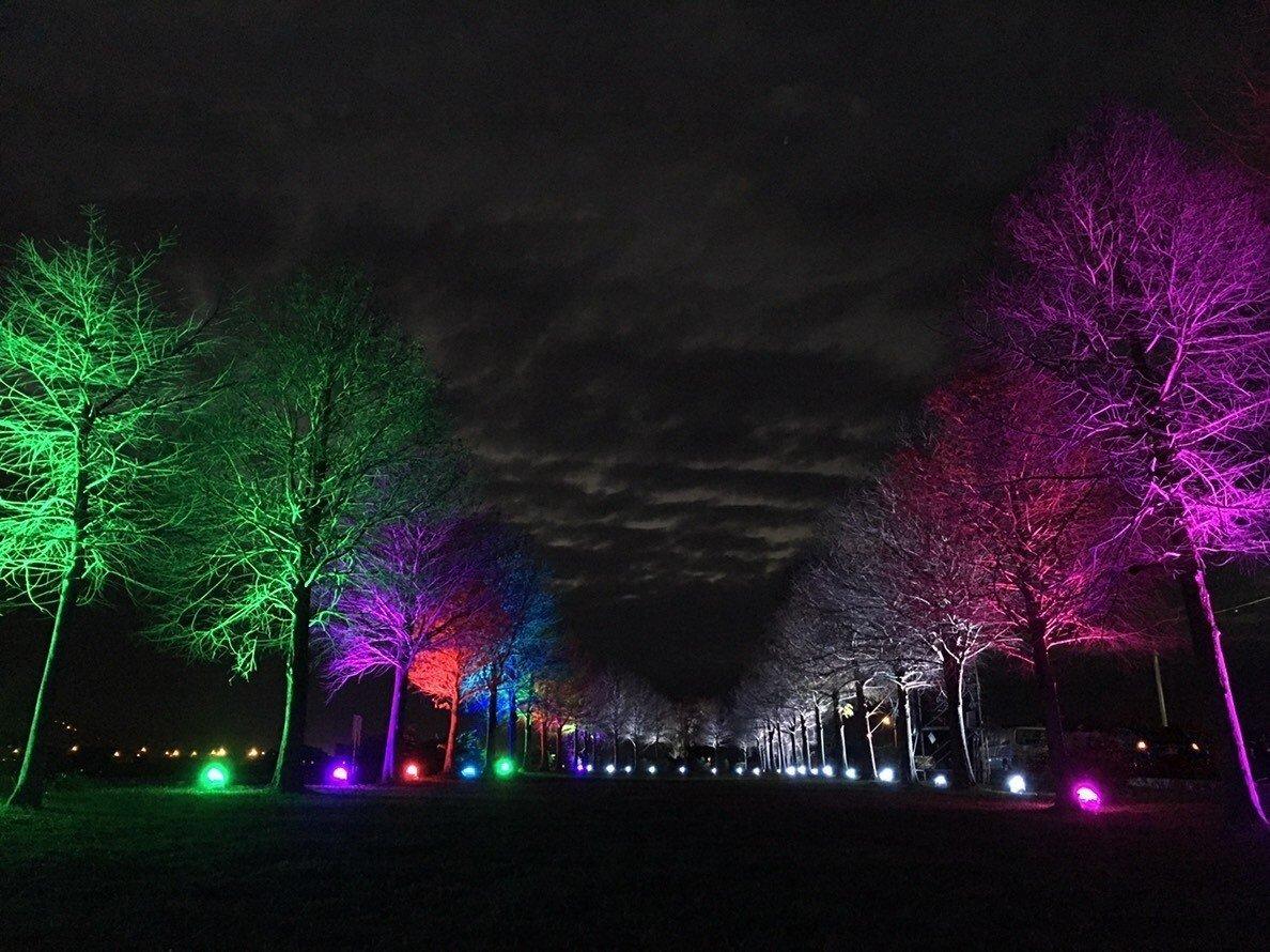 宜蘭縣三星鄉安農溪落羽松秘境今(31)日晚上起開始點燈。圖:宜蘭縣三星鄉/提供