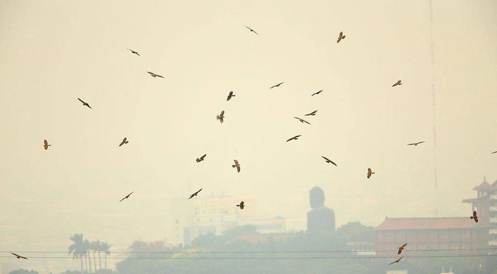 大佛鵟鷹成群在天上飛翔的畫面十分壯觀(鍾上瑋攝影)圖:交通部觀光局/提供