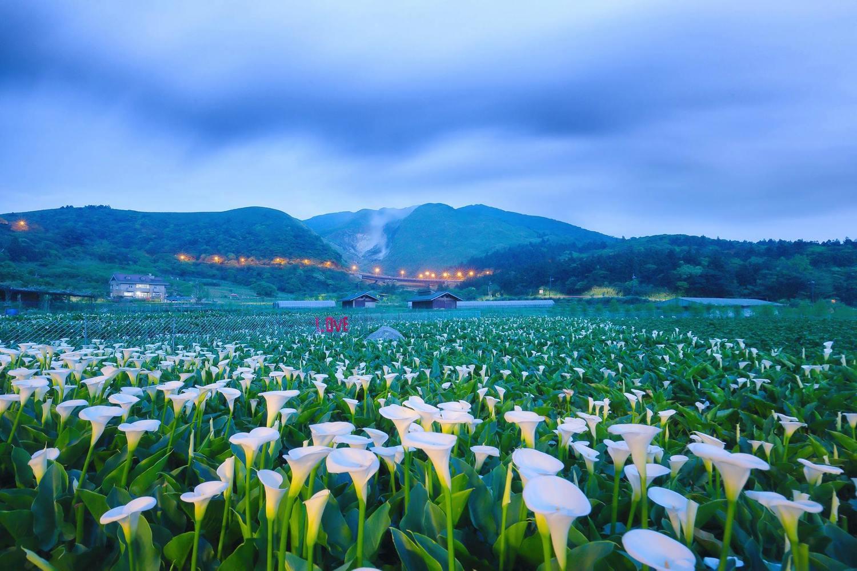 「2019竹子湖海芋季」將於3月29日至4月28日登場!圖:取自2019竹子湖海芋季數數海芋網站