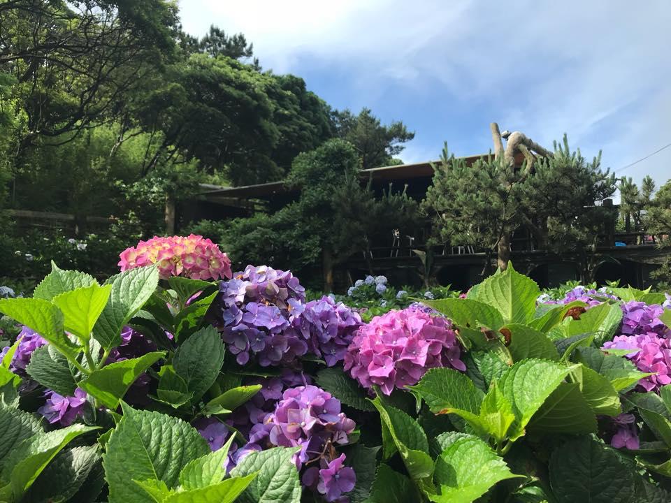 名陽匍休閒農莊去年盛開花況。 圖:取自名陽匍休閒農莊臉書