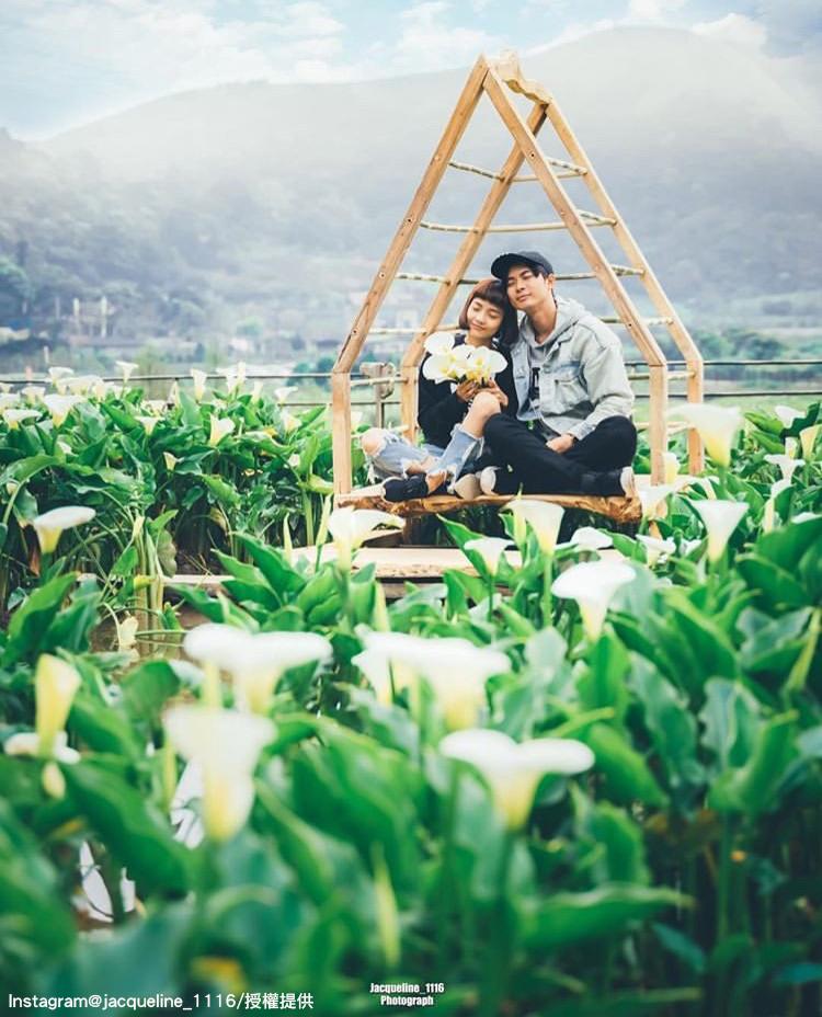 陽明山竹子湖海芋花田,非常適合情侶或是親子一同前往。圖:翻攝自instagram jacqueline_1116 /開放權限