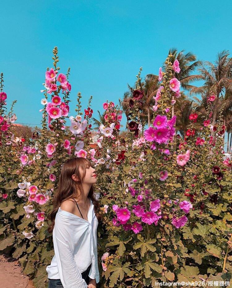 蜀葵花最高能長至2公尺,讓人彷彿置身在花園秘境中。圖:翻攝自instagram she926 /開放權限