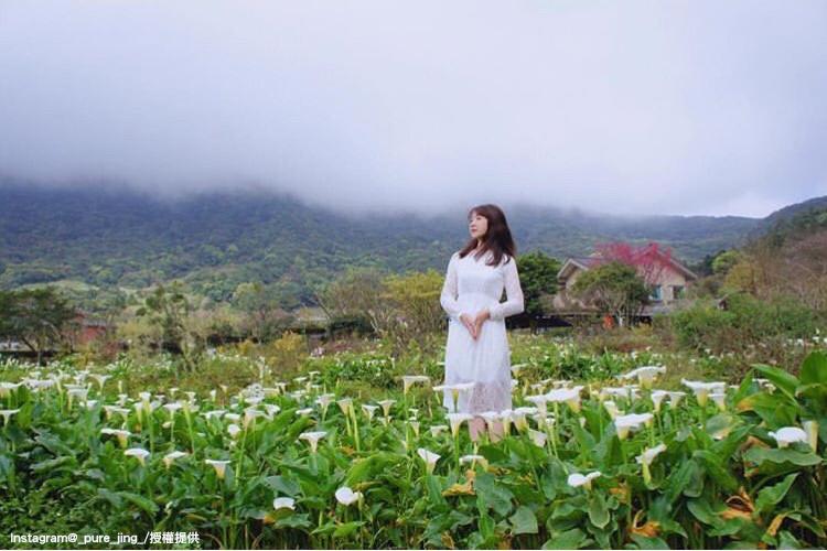 陽明山竹子湖海芋花季,將於3月29日展開。圖:翻攝自instagram _pure_jing_ /開放權限