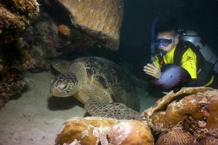 當你在馬布島體驗潛水時,幸運的話還能看見海龜的蹤跡。圖:馬來西亞觀光局/提供