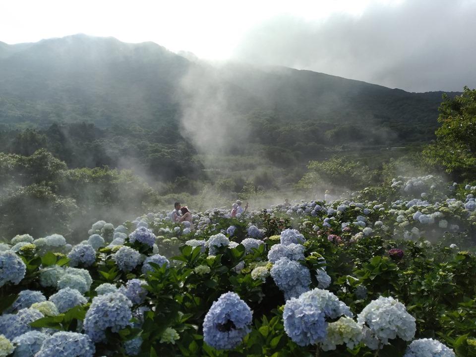 花與樹園藝5月14日花況。 圖:取自花與樹園藝臉書