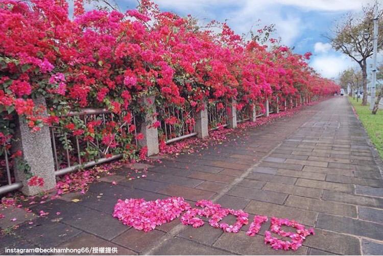 台中中科東大公園旁的九重葛花步道。圖:翻攝自instagram beckhamhong66 /開放權限