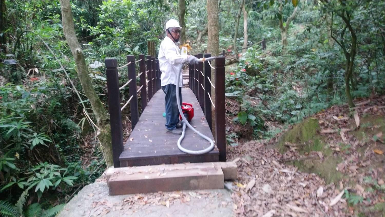 台中市風管所派員清除大坑步道的荔枝椿象。台中市觀旅局/提供