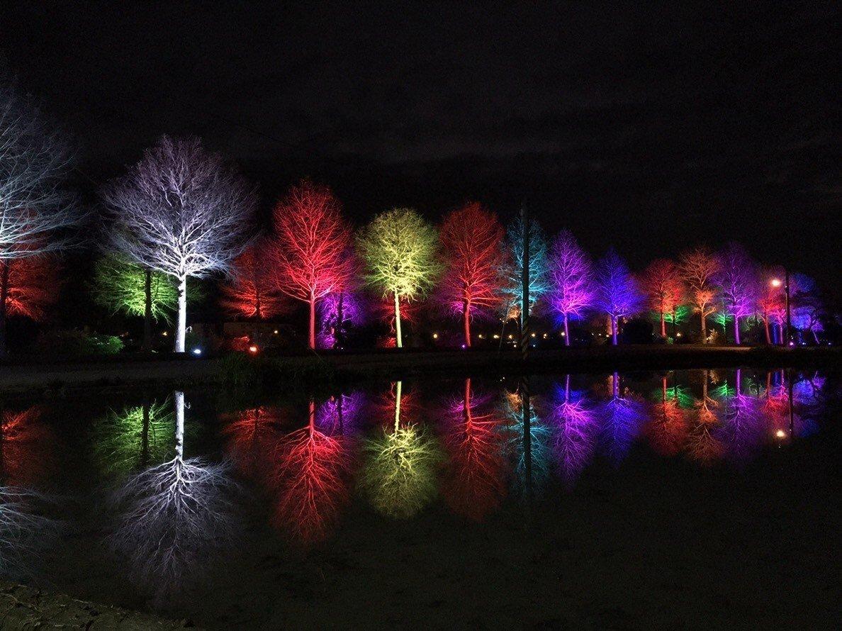 落羽松樹上裝設100盞LED探照燈,有紫色、白色、紅色、藍色等多種顏色,倒映在水面上相當漂亮。圖:宜蘭縣三星鄉/提供