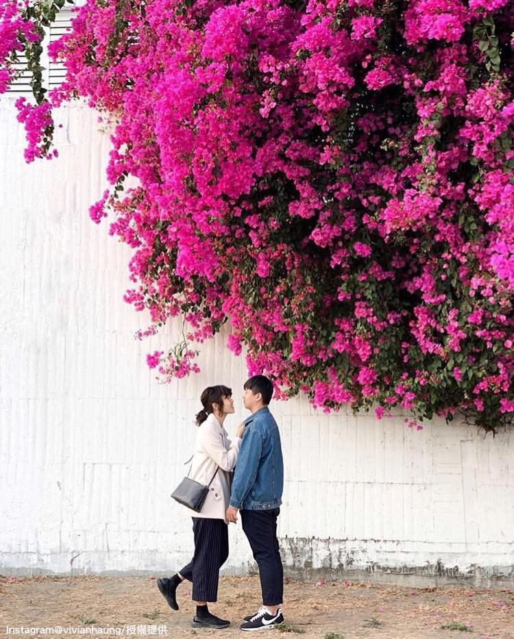 安平九重葛花牆能拍出具有異國風情的照片。圖:翻攝自instagram vivianhaung /開放權限