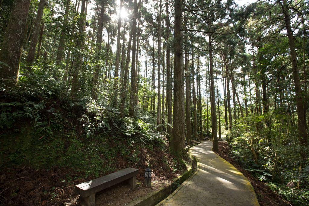 東眼山是台灣小百岳之一。圖:翻攝自桃園觀光導覽網