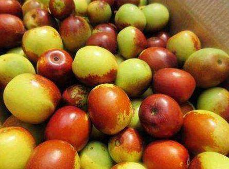 棗子的維生素c居水果之首。(圖/翻攝自百度百科)