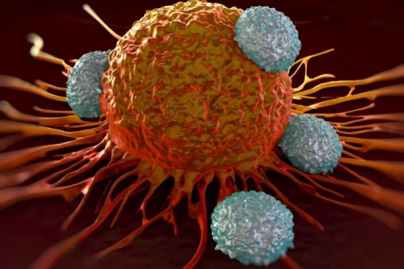 英國研究團隊找到癌症細胞的致命傷。(取自推特)