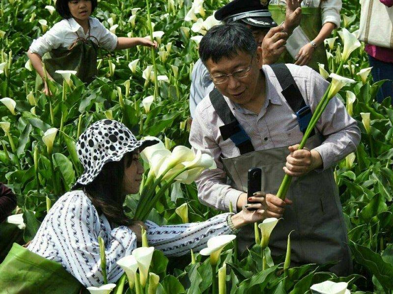 台北市長柯文哲出席竹子湖海芋季開幕儀式,也下田摘了5株海芋花,立刻宅配給夫人陳佩琪。(取自台北響樂趣臉書專頁)